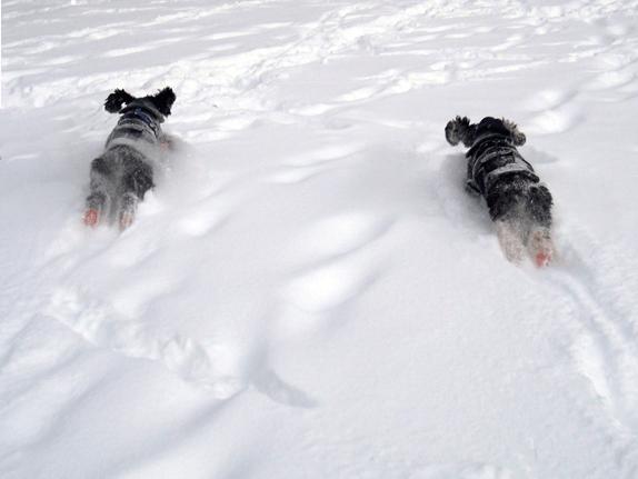 Pawz hundesokker – hvis hunden kunne velge