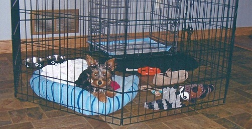 It Didn T Take Long For Her To Adjust The Puppy Apartment She Was Trained In Less Than Three Weeks