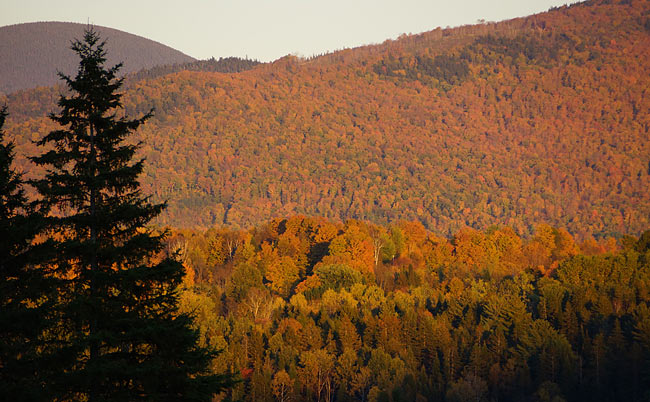 autumn-leaves-in-new-hampshire