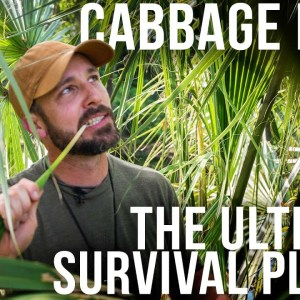 The Incredible Cabbage Palm | ON Three
