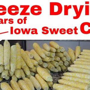 Freeze Dried Corn on the Cob -- IOWA SWEET CORN YEAR ROUND!