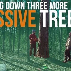 Cutting Down More Big Trees | Forest to Farm