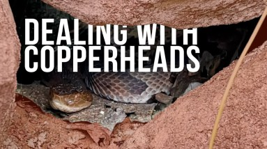 Dealing with Copperheads | ON Three
