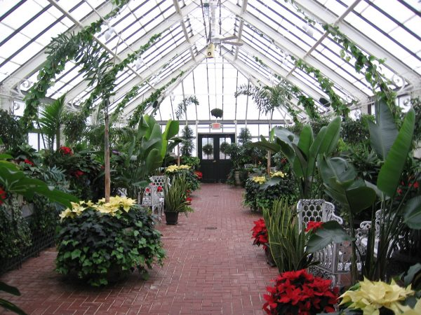 Biltmore Greenhouse (Photographer: Lesli Gibbs)