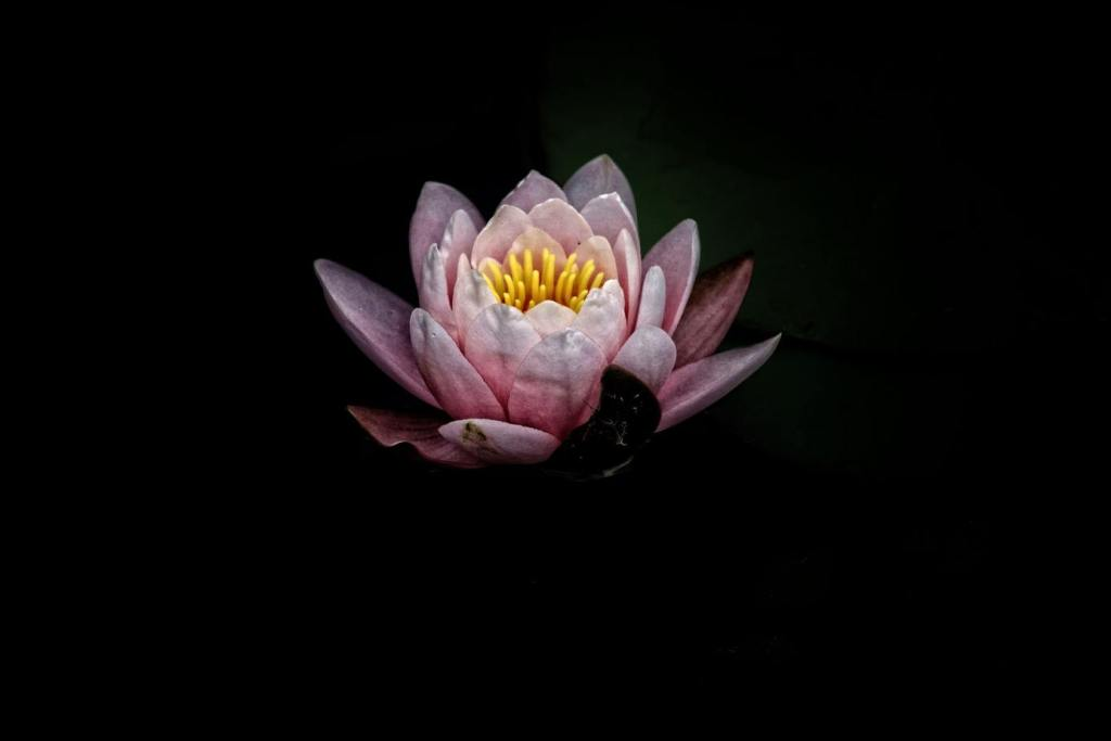 Lotus Flower as a Buddhist Symbol | Photo by DAVIDCOHEN on Unsplash