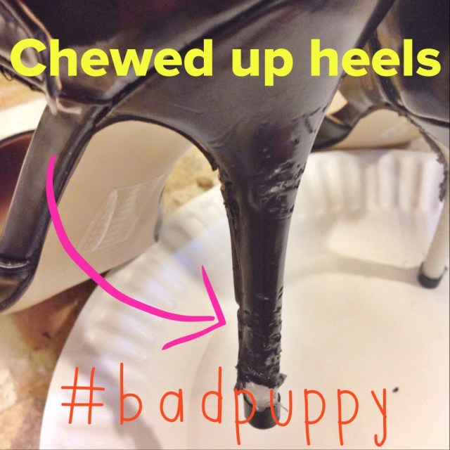 how to fix chewed up heels