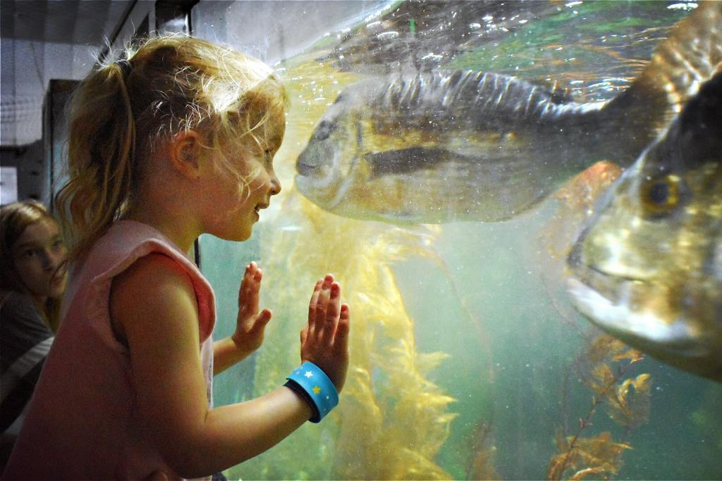 A young girl leans against the glass of a large fish tank in the EcoWorld Aquarium & Wildlife Rehabilitation Centre in Picton, New Zealand. Two large fish swim by the glass.