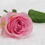 Najslávnejšia Peruánka s ružami – svätá Ruženka z Limy