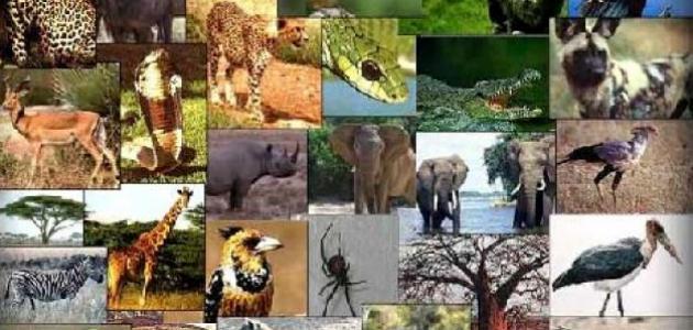 بحث عن المخلوقات الحية