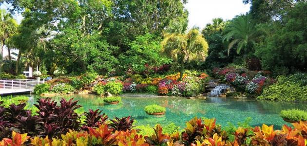 """""""طالع"""" ذكر الله تعالى ثلاثة أنواع من النباتات في بستان صاحب الجنتين حدّدها مما يلي"""