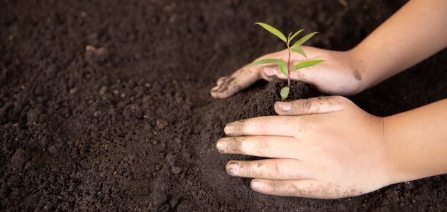 موضوع عن زراعة الأشجار موضوع