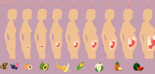 معدل زيادة وزن الجنين موضوع