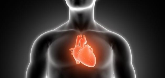 أين يقع القلب في جسم الإنسان موضوع