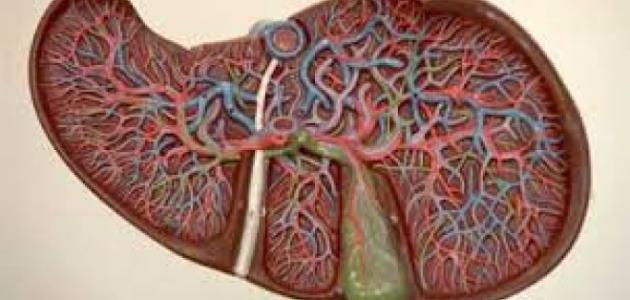 أعراض فيروس سي الخامل موضوع
