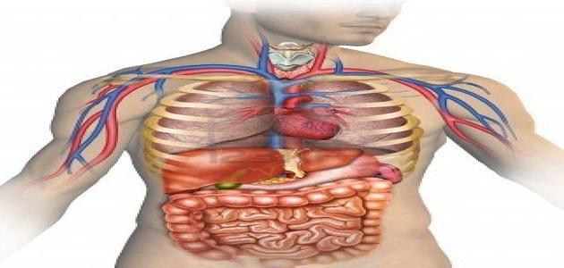كم جهاز في جسم الإنسان موضوع