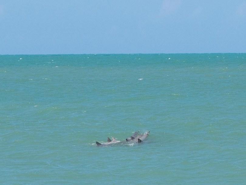 Golfinhos dando alegria ao passeio