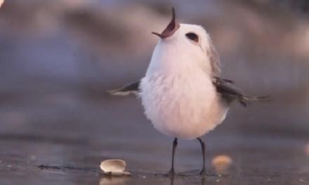 Llega Piper, el nuevo corto animado de Pixar