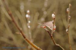 3.dzień wiosny