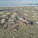 Strandexcursies Moedertje Groen