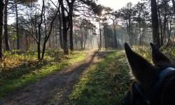 Hollandse Duinen - Muis