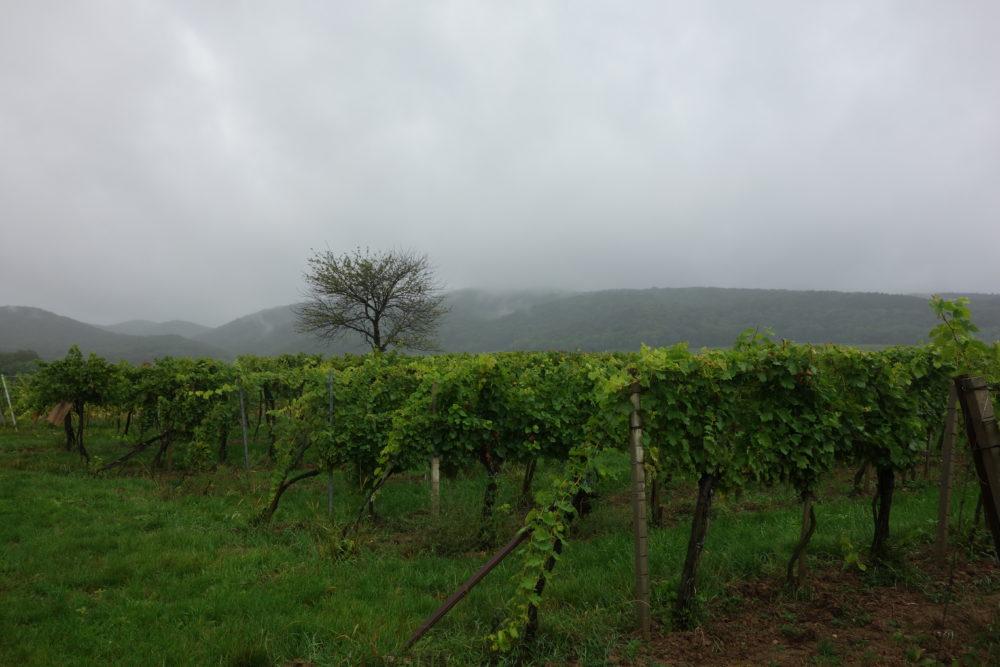 Weingartenweg