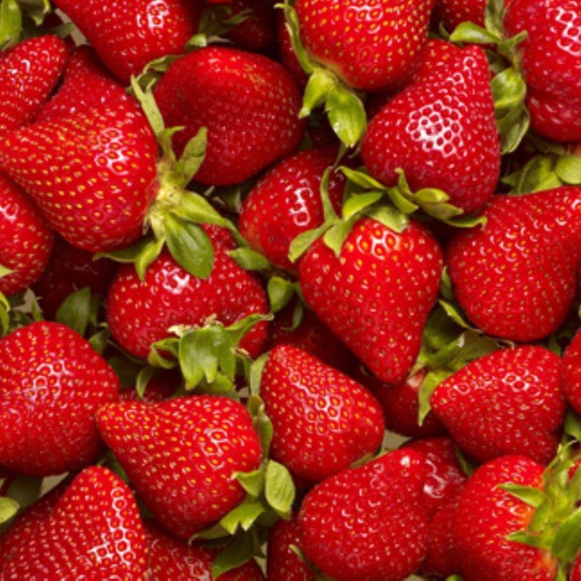 jordbær elsanta