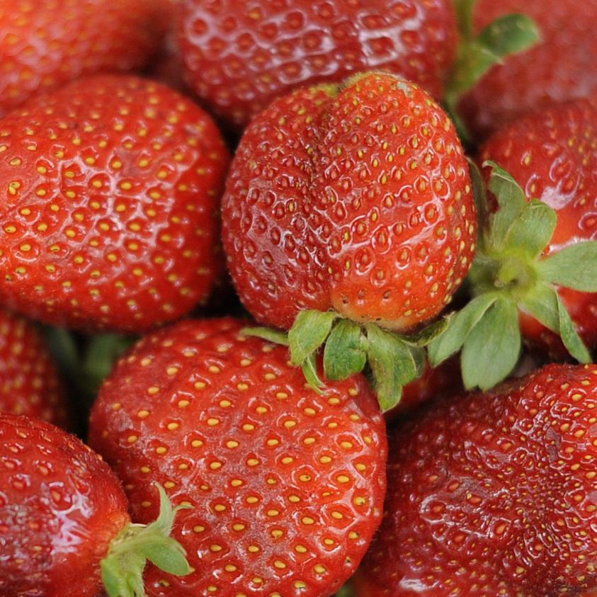 jordbær honeyeye