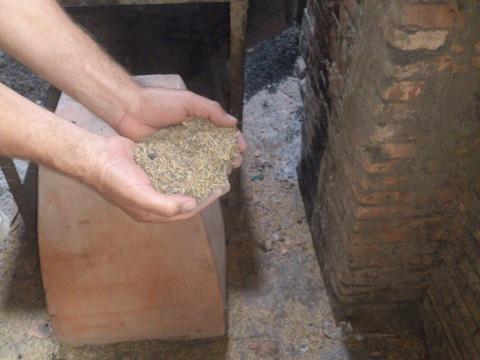 Risskaller bruges til brændsel
