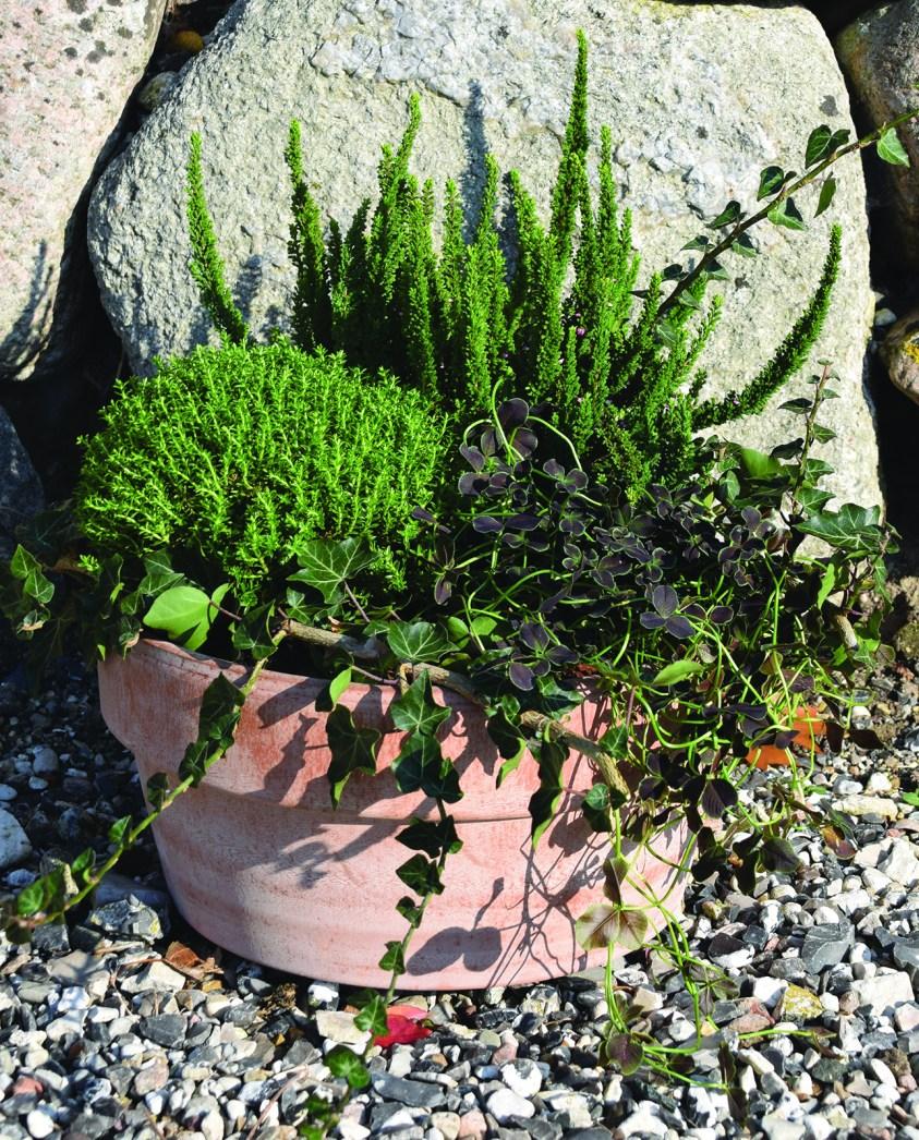 sammenplantning med grønne planter