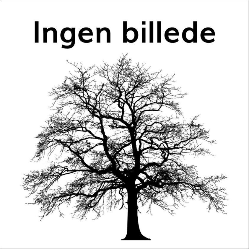 Picea Glauca Sanders Blue Gran