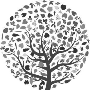 Tilia cordata Green Globe Skovlind