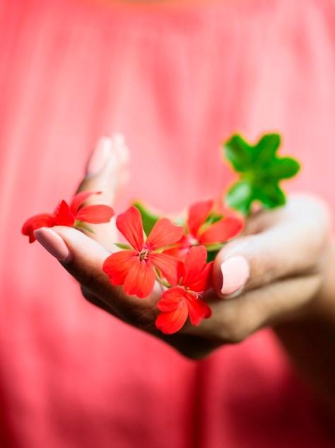 de geranium