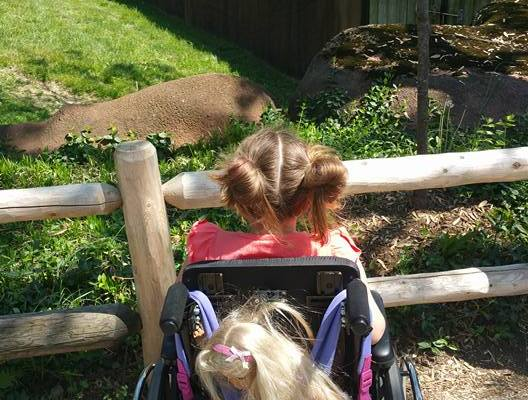 Photo: A girl sits with her back to the camera in a wheelchair. She's looking at the animals in the zoo.