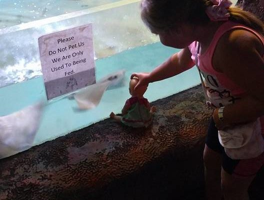 PHOTO: Kimmy's daughter helps her doll get a better view of the the fish in the aquarium.