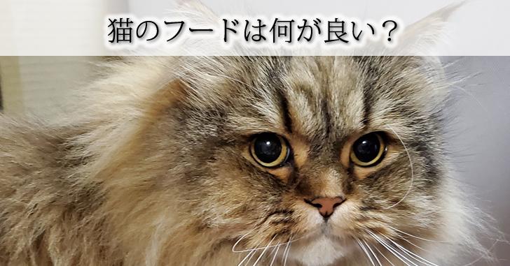 猫のフード