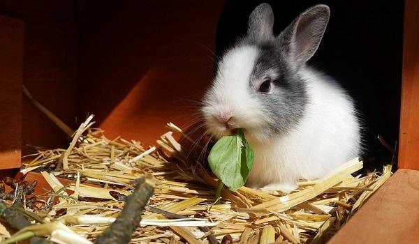 rabbit-2940275_640