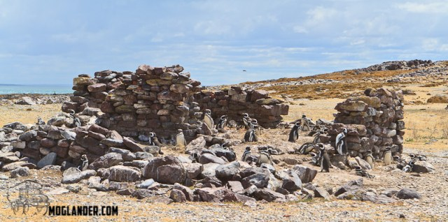 The Penguins have taken over the old buildings from when they had to live on the Island to man the lighthouse