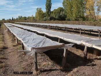 Plum drying racks