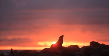 This seal posed perfectly at sunset for us