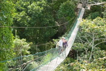 Canopy touring
