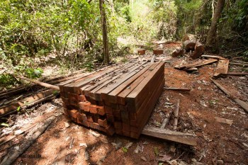 fallen trees are sometimes processed to build and maintain lodges. All this was done by chainsaw.