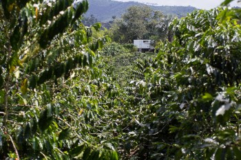 colombia coffee farm