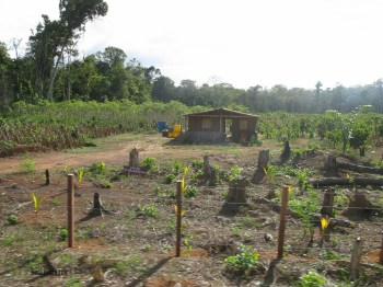 After the rainforest is gone, this is the farm for the next few years.