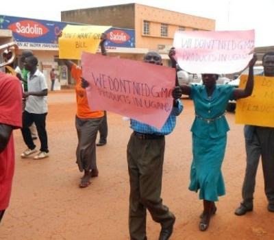 Rwanda Wary Of GMO Use In East Africa