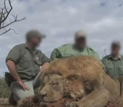 lion trophy imports