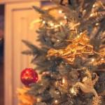 クリスマスツリー もみの木 育て方 鉢植え 水やり 虫