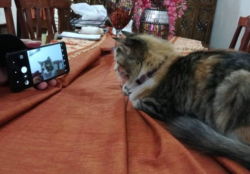 Tech-Cat3
