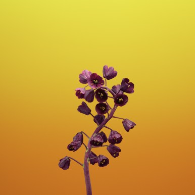 iPhone-X-Stock-Wallpapers-Mohamedovic (4)