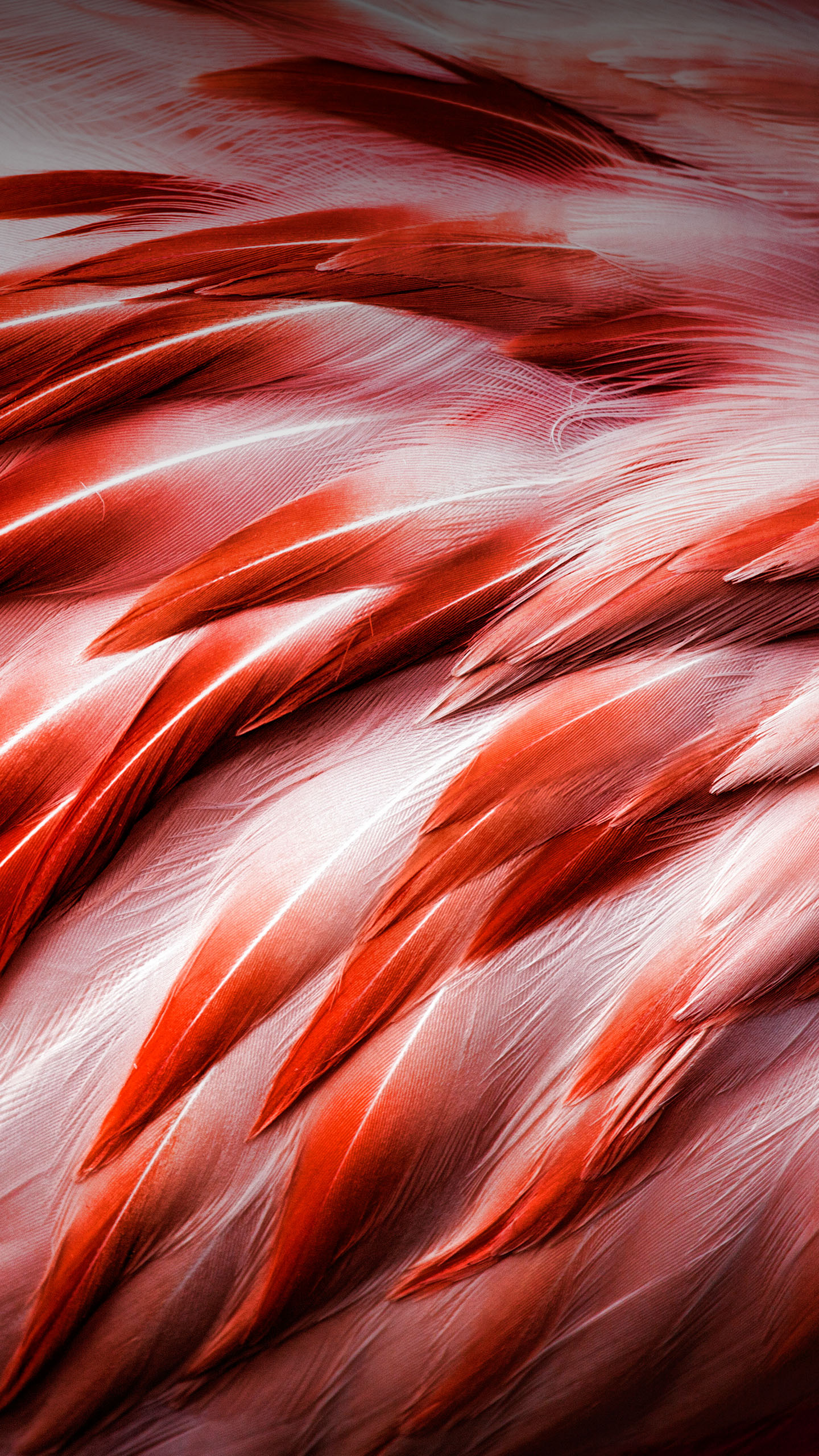 ZTE-Axon-7-Stock-QHD-Wallpapers-Mohamedovic-Wings