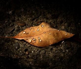 500px Photo ID: 83639037 - Raindrops on Brown Leaf